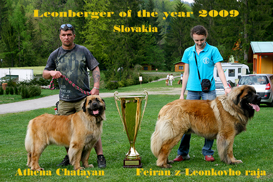 Leonberger of the year 2009